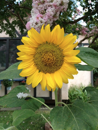 Hello Sunshine Heart